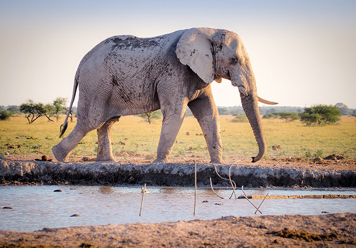 Elephant Foster Parent Programme